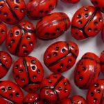 0050302 ladybird lieveheersbeestje bead rood met zwarte stippen